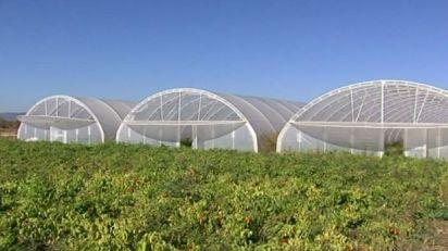 U pirotskom kraju voće i povrće dobro uspeva uz subvencije
