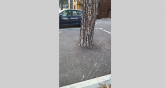 Zabetonirao bor na Zlatiboru, iscrtao parking mesta FOTO