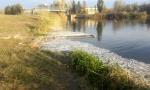 Zagađena uginula riba završila U NAŠIM TANjIRIMA: Šokantan epilog pomora u Velikom bačkom kanalu