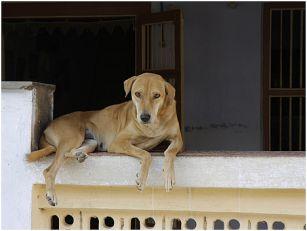 Zoohigijena privremeno sklanja pse lutalice s ulica